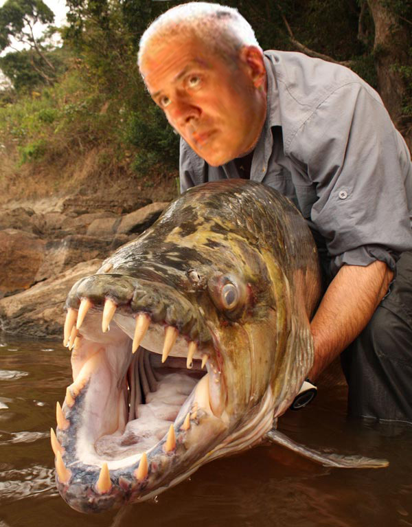 Srpski som,  Serbian cat fish