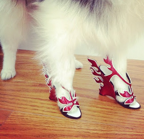 the-world_s-top-10-best-images-of-dogs-in-shoes-3