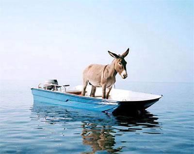 ...a kad se povuce voda svi ce vidjeti koliki sam magarac