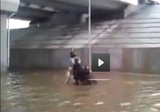 pas i invalid u poplavama