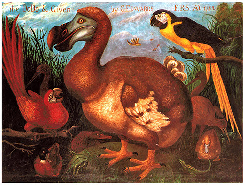 ptica dodo