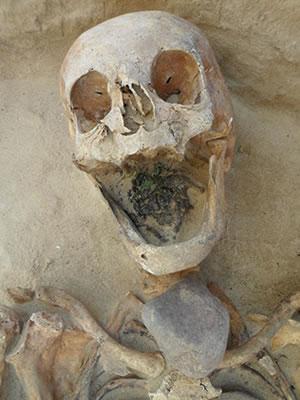 skeleton.2