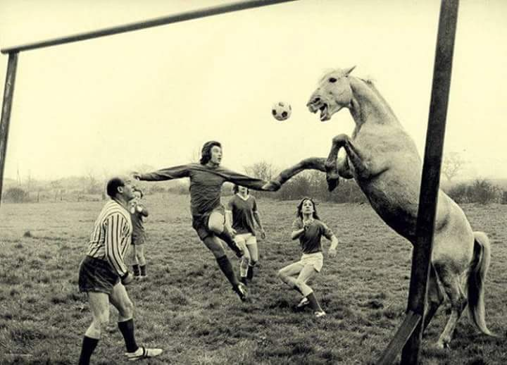 football-horse