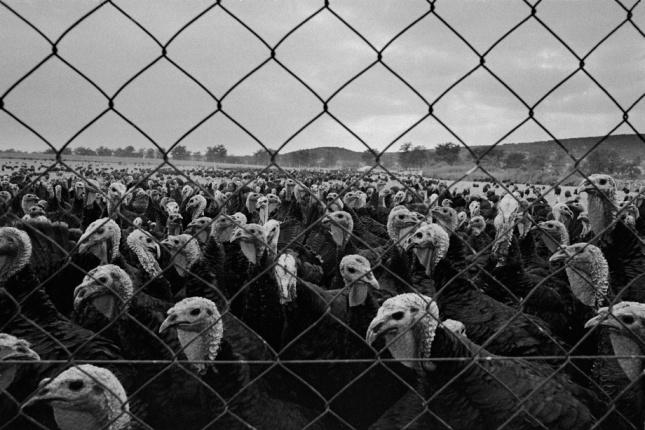 nismo mi ovce