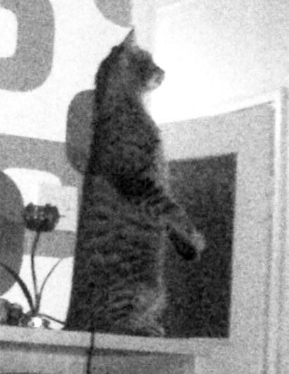 Gospodin Mačak, moralna vertikala