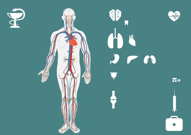 tijelo