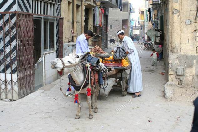 street-trader-with-donkey-cart-egypt-kairo-AN81JD